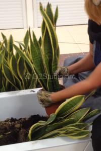 Процесс посадки растений в ТЦ Ханой-Москва